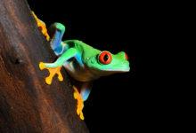 """""""Kakaovou žábu"""" a dalších 60 druhů zvířat objevili vědci v surinamské džungli"""