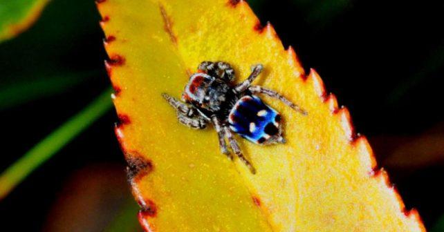 Při svém výletu si vyfotil zajímavého pavoučka. O dva roky později po něm zvířátko pojmenovali.