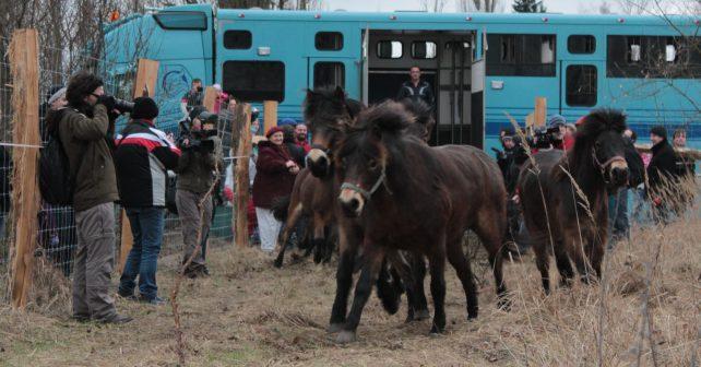 Divocí koně jsou zpátky vČesku