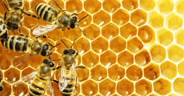 Obyvatelé Londýna se ve velkém pouští do včelaření