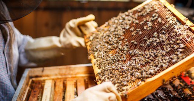 Včelaři dostanou v Libereckém kraji podporu milion korun
