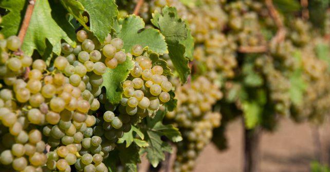Vinobus umožní od září poznat Moravu nevšedním způsobem