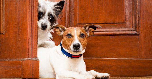 Online útulek pro psy hledá pro majitele ideální mazlíčky