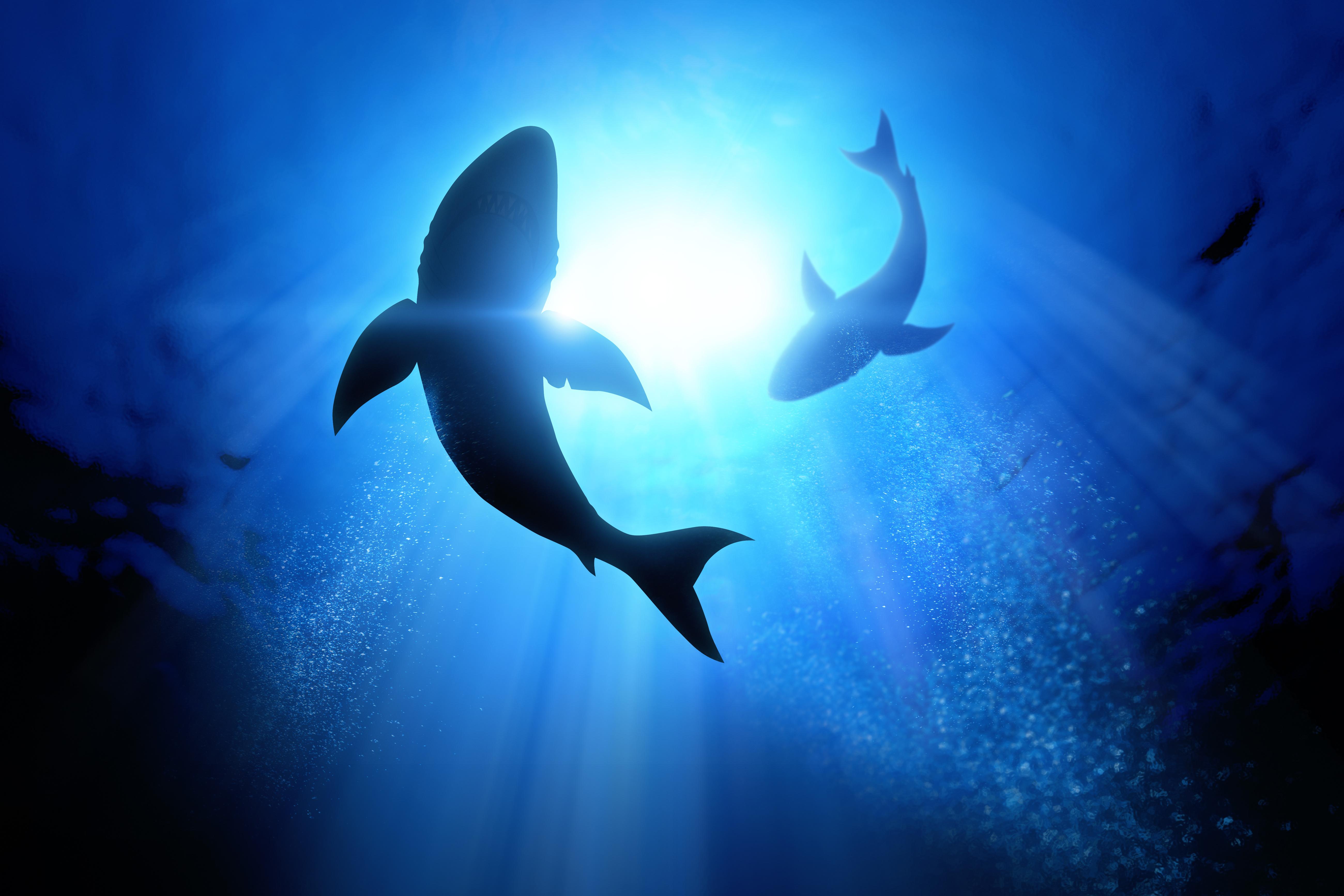 Bývalá basketbalová hvězda se zasadila o záchranu milionů žraloků