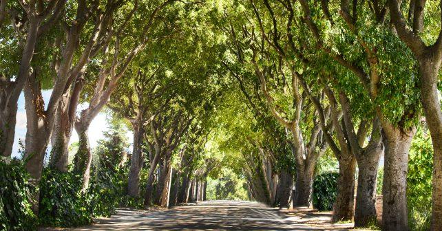 Krystalická látka pomůže stromům napít se i za sucha