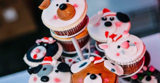 Zvířata ve zlínském útulku oslavila vlastní Vánoce