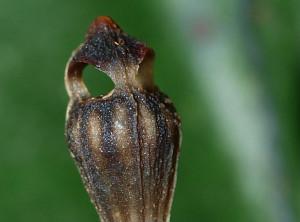 olomouc-rostlina2