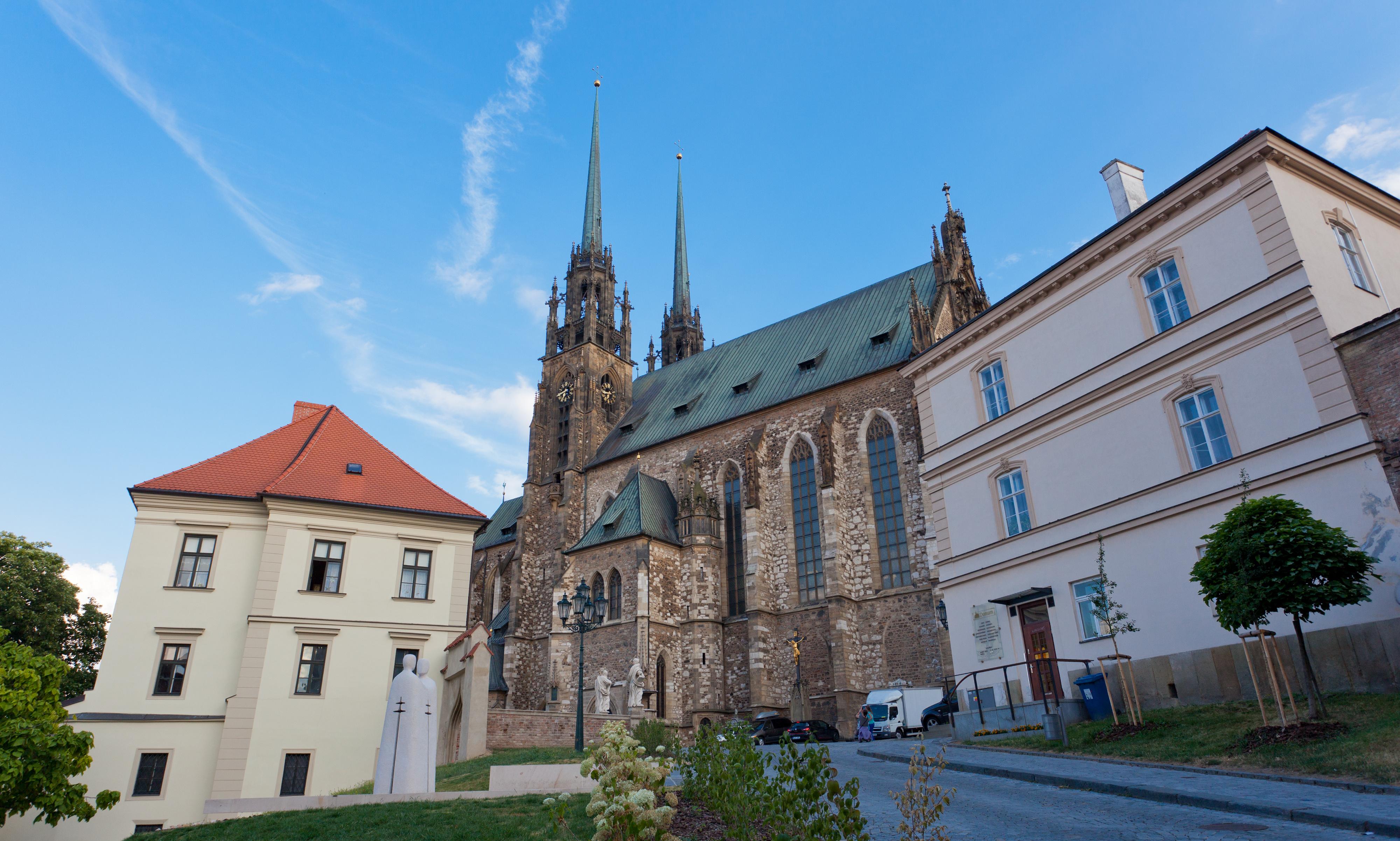 Brno bude zelenější. Stožáry trolejového vedení obrostou popínavé rostliny