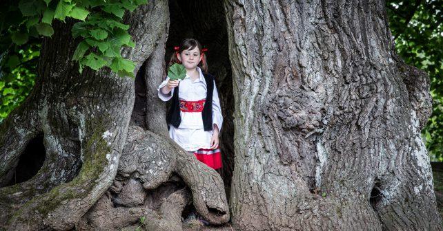 Lípa z Českého ráje bojuje o titul Evropský strom roku