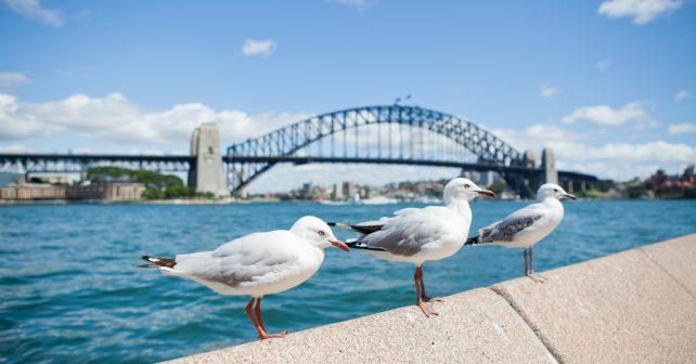 Australané vymysleli mořskou popelnici, která pomůže čistit přístavy