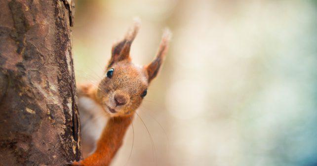 Aplikace z hradecké univerzity zjednoduší záchranu zvířat