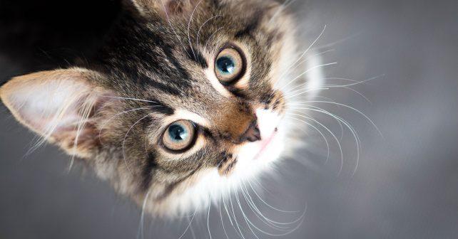 Podle nové studie jsou kočky citlivější, než se předpokládalo