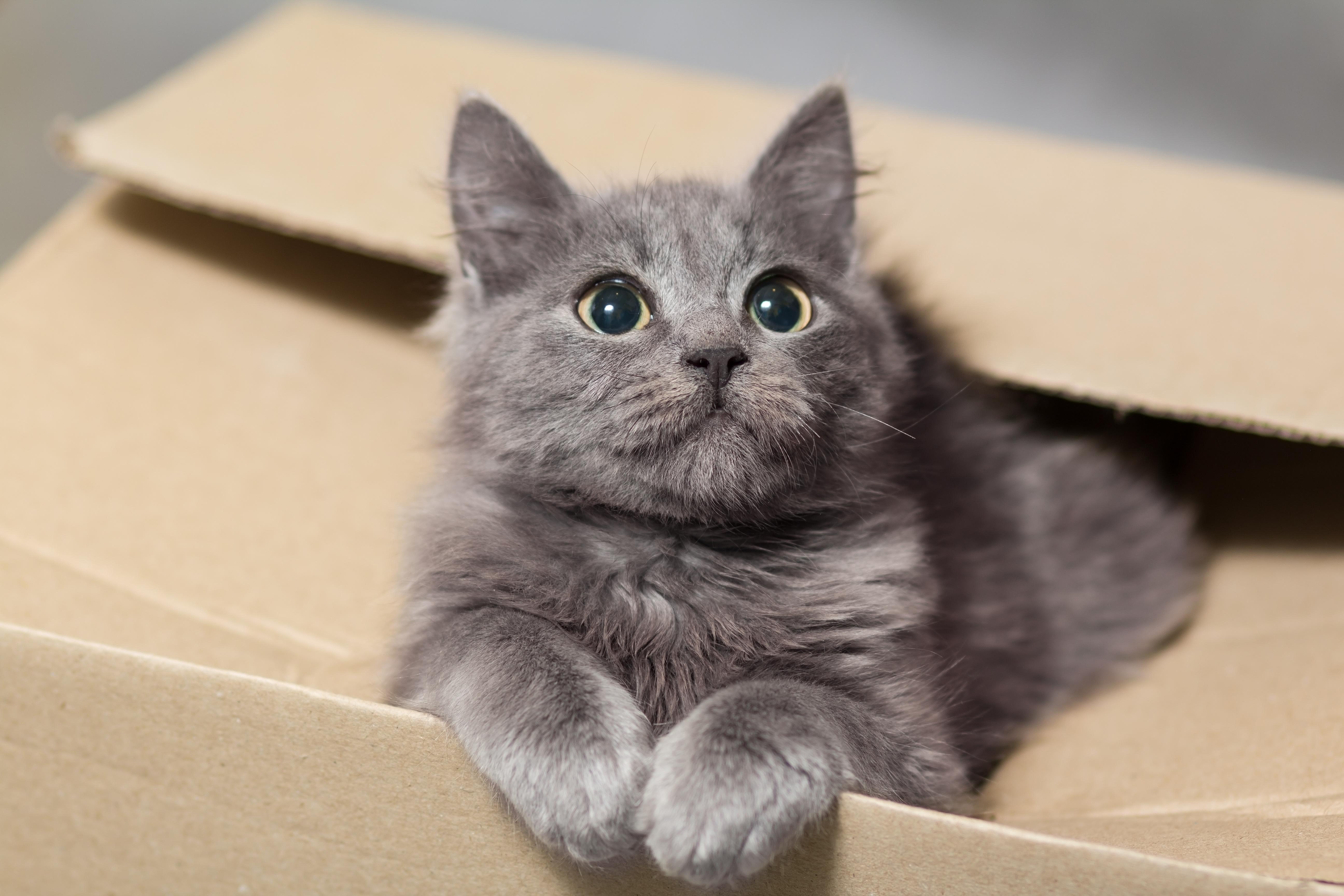 Britové poslali nedopatřením v balíku kočku, zvládla cestovat poštou 350 kilometrů