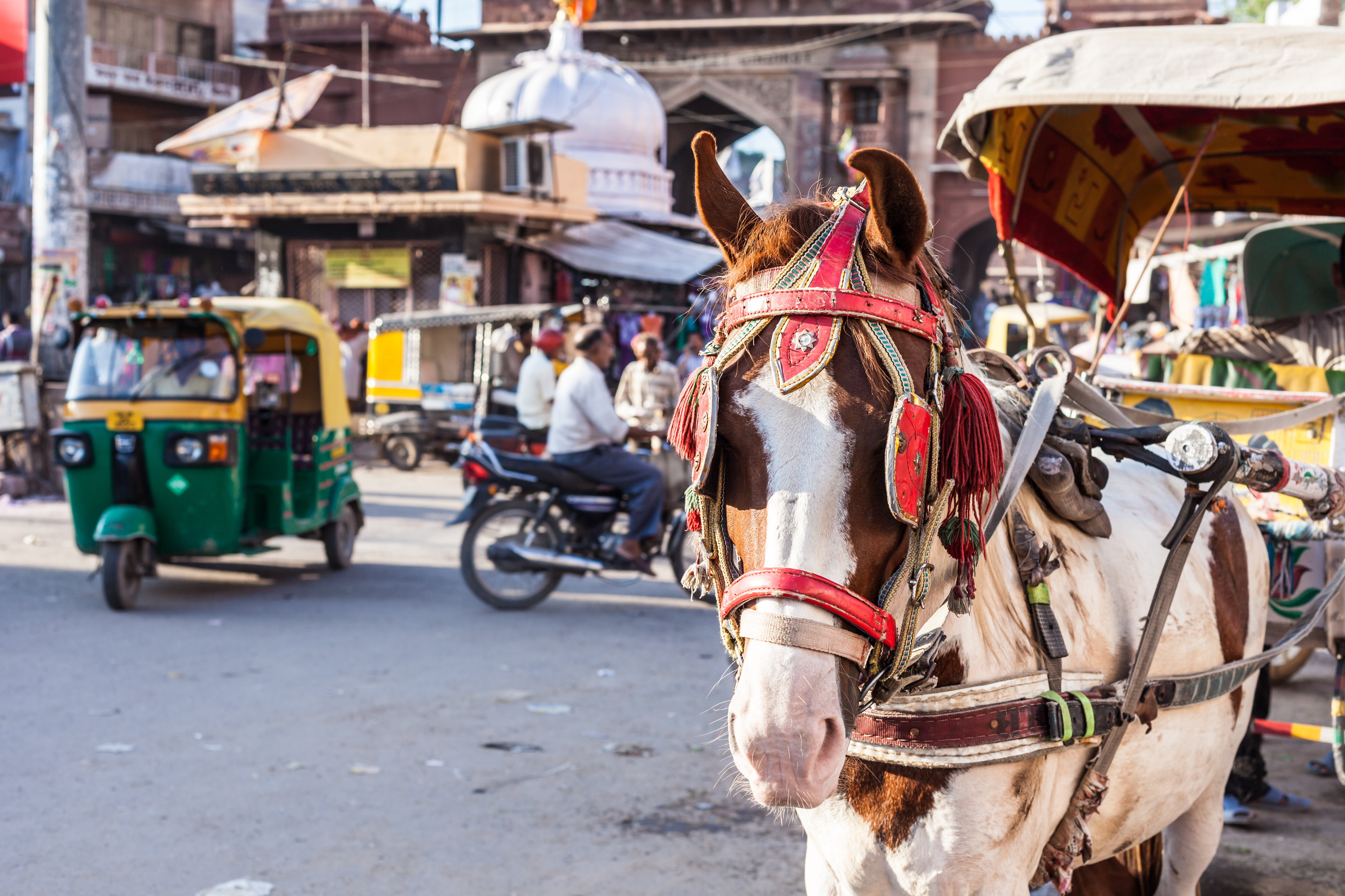 V Indii vznikl koš, který lidem vymění odpadky za připojení k wi-fi