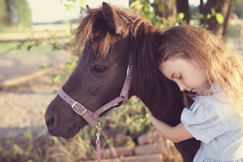 Koně dokážou podle nové studie číst lidské emoce