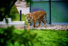V zoo v Hluboké nad Vltavou nově zachraňují zvířata pomocí inkubátoru
