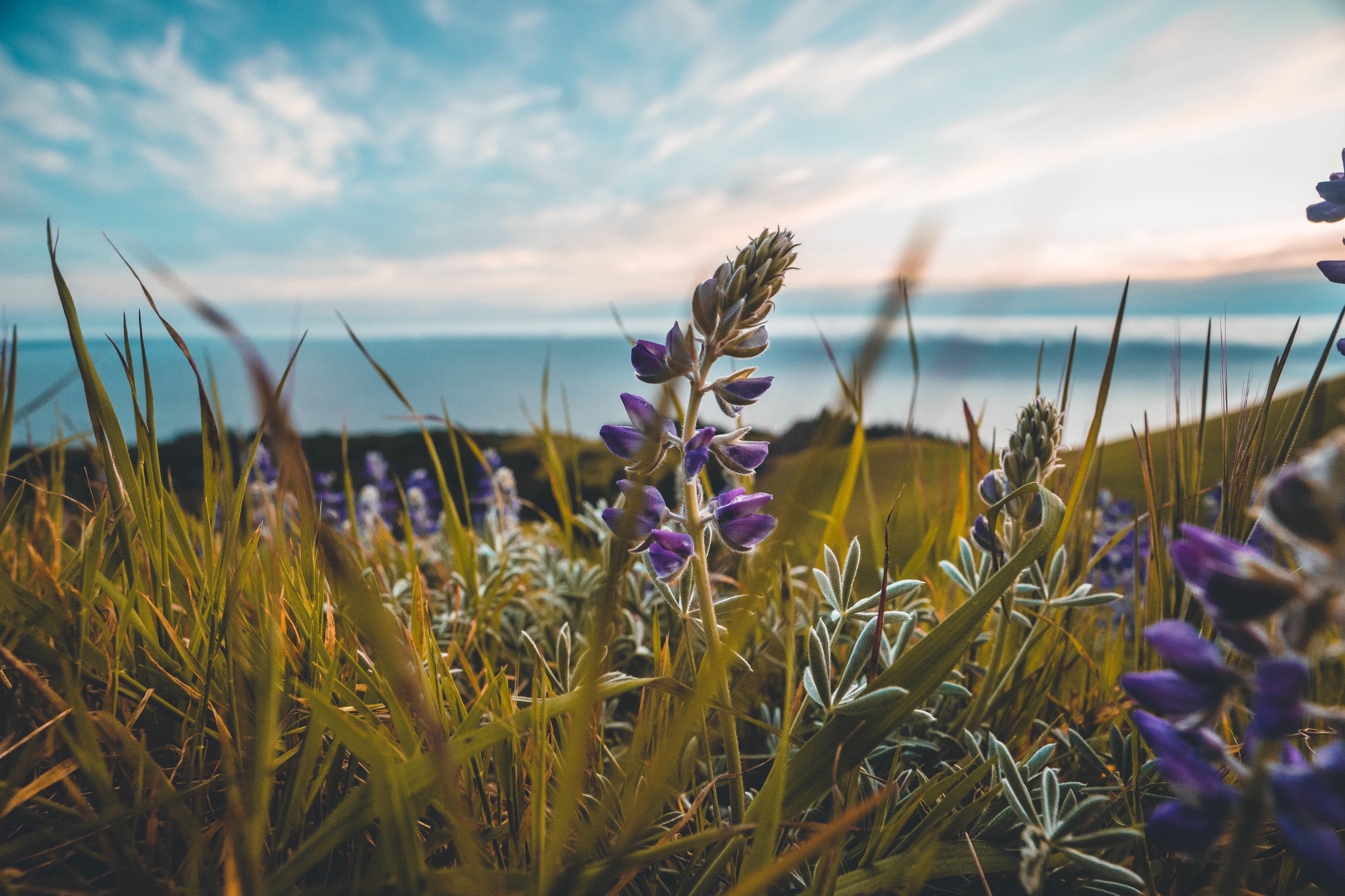 Školáci v Krkonoších pomáhali zachraňovat vzácné rostliny