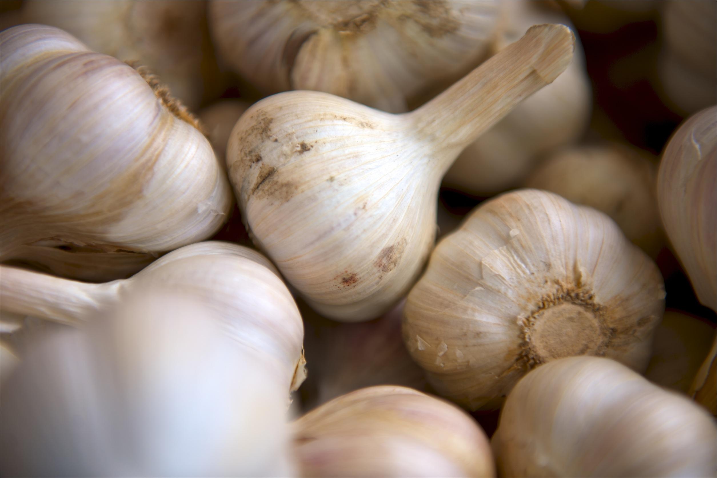 V Itálii vypěstovali česnek, který nebrání líbání