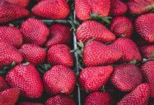 Neprodané jídlo ze supermarketů povinně poputuje do potravinových bank