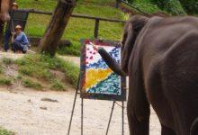 Ústecké slonice malují obrazy a přispívají tak výzkumu nemocí