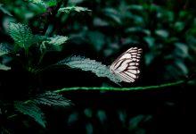 Stěbořické arboretum se stalo domovem stovek exotických motýlů a rostlin