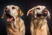 Německý fotograf baví svět originálními snímky psů se žrádlem