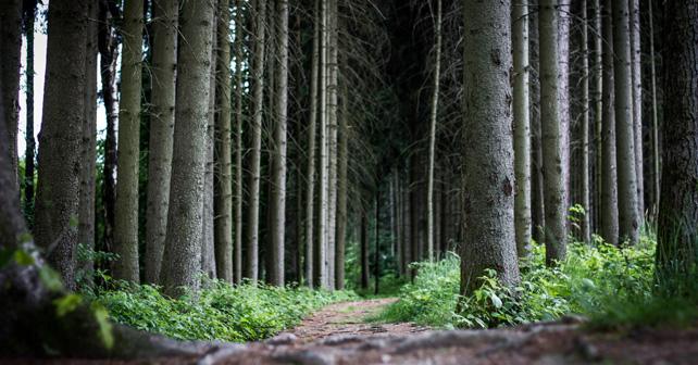 České lesy jsou v nejlepší kondici za posledních 250 let
