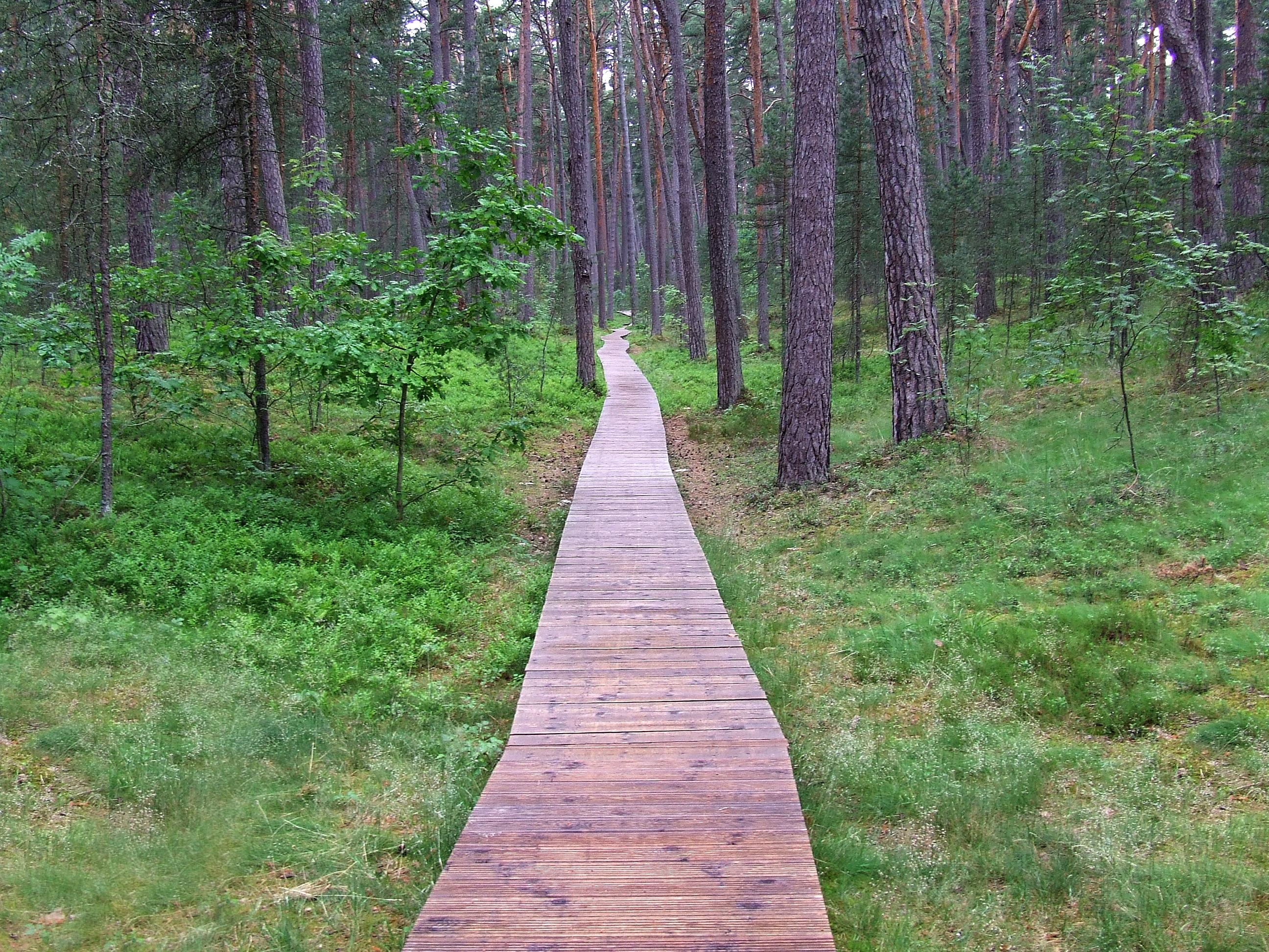 Projekt Dřevo je cesta ukáže pozitivní dopady využívání dřeva