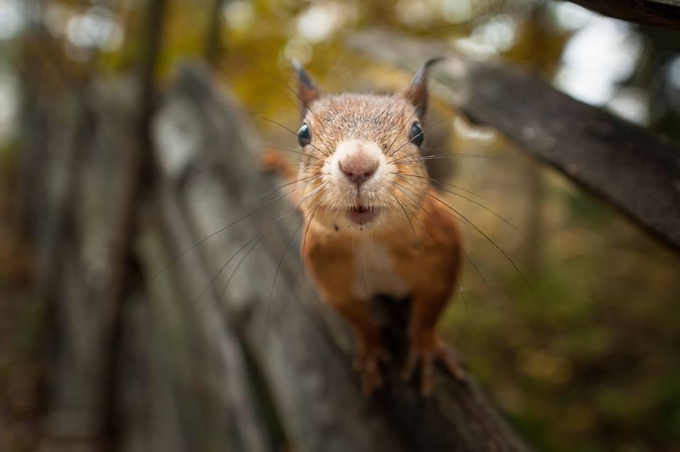 Finský fotograf pořizuje famózní záběry z volné přírody
