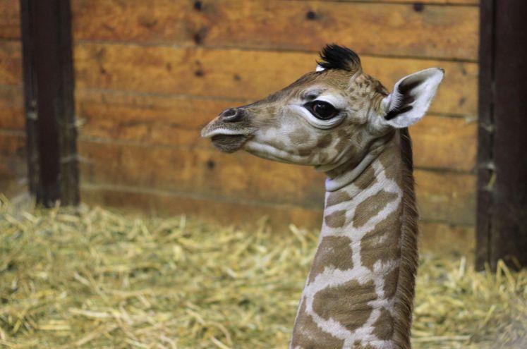 Zoologické zahrady v Česku nalákaly na mláďata nejvíce lidí v historii