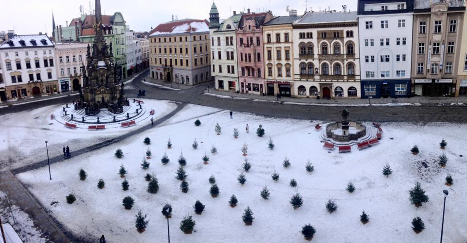 Na olomouckém náměstí vznikl dočasný les z vánočních stromků
