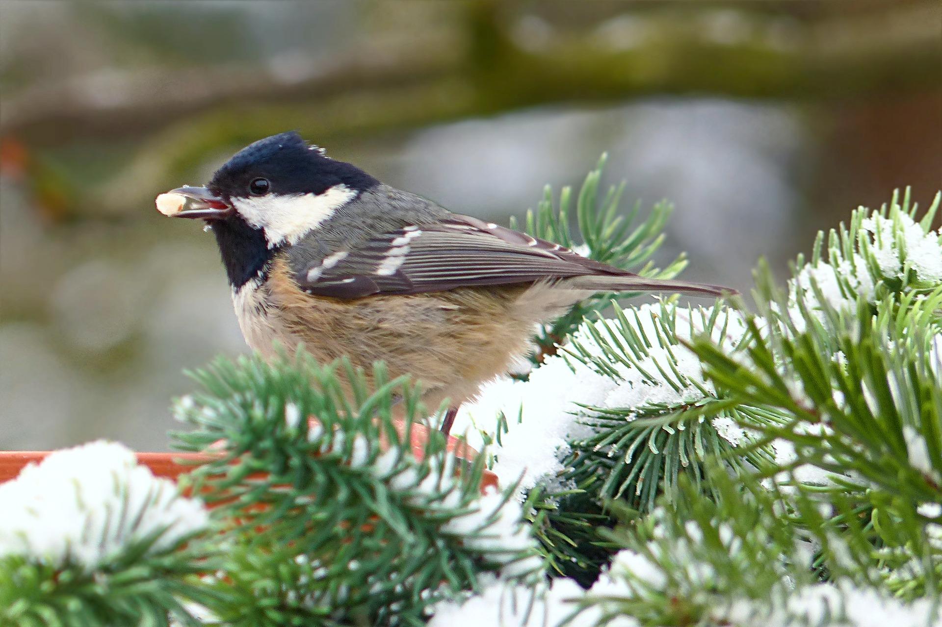V zimě je v českých krmítkách možné pozorovat až 30 ptačích druhů