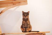Každá adopce je pro nás ta nejlepší odměna, říkají majitelé umisťovací kočičí kavárny Pelíšek