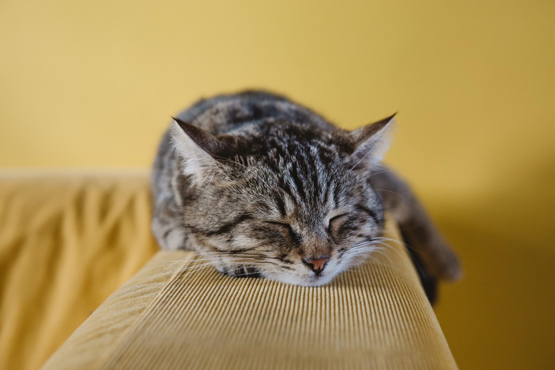 Kočky možná mají k člověku vztah, podle nové studie ho upřednostní nad plnou miskou i hračkami