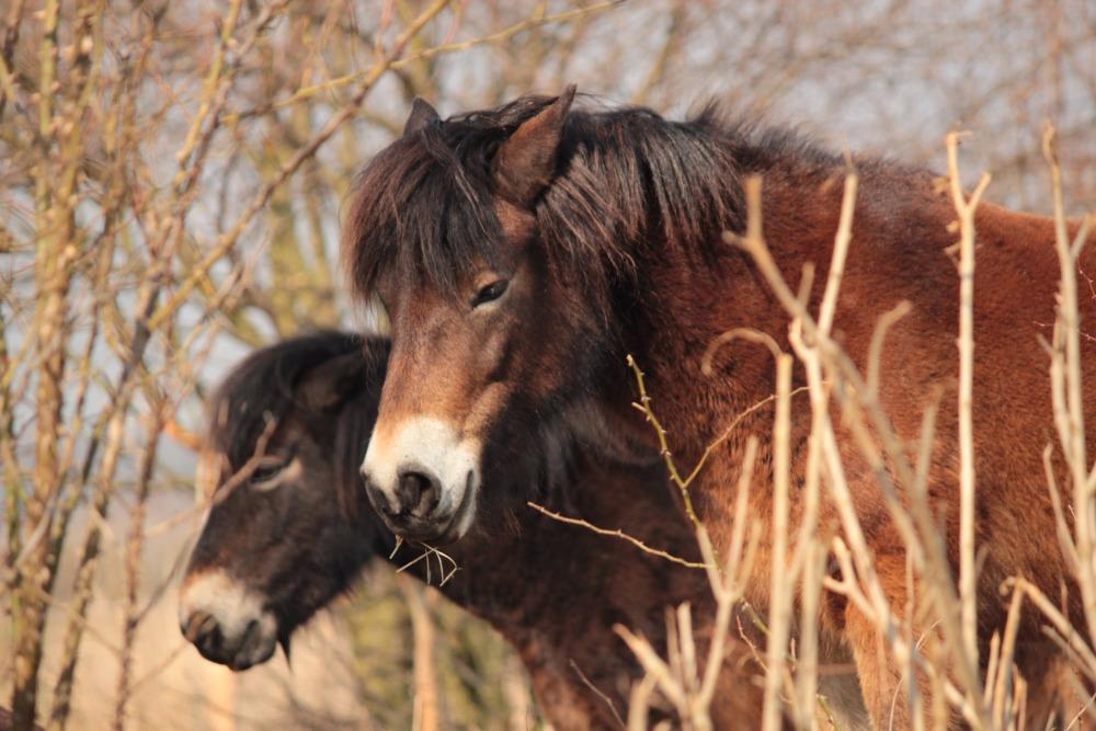 Rezervace u Milovic, která je domovem divokých koní, se rozšířila o třetinu