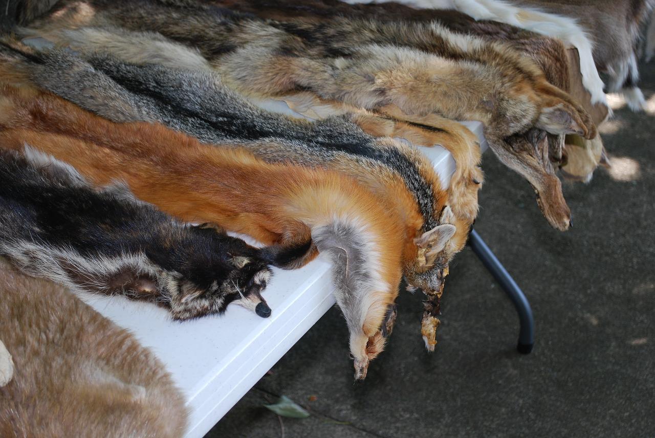 Sněmovna schválila zákaz kožešinových farem od roku 2019
