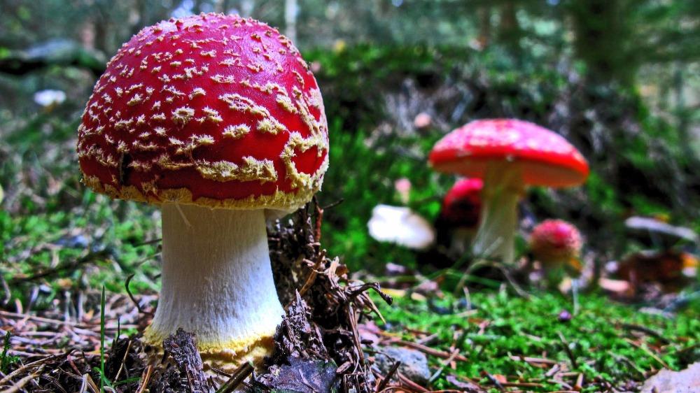 Češi vytvořili aplikaci na rozpoznávání hub i v terénu