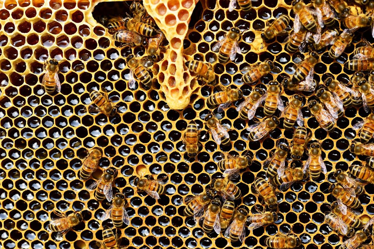 Originální český start-up umožňuje pronájem včelích úlů