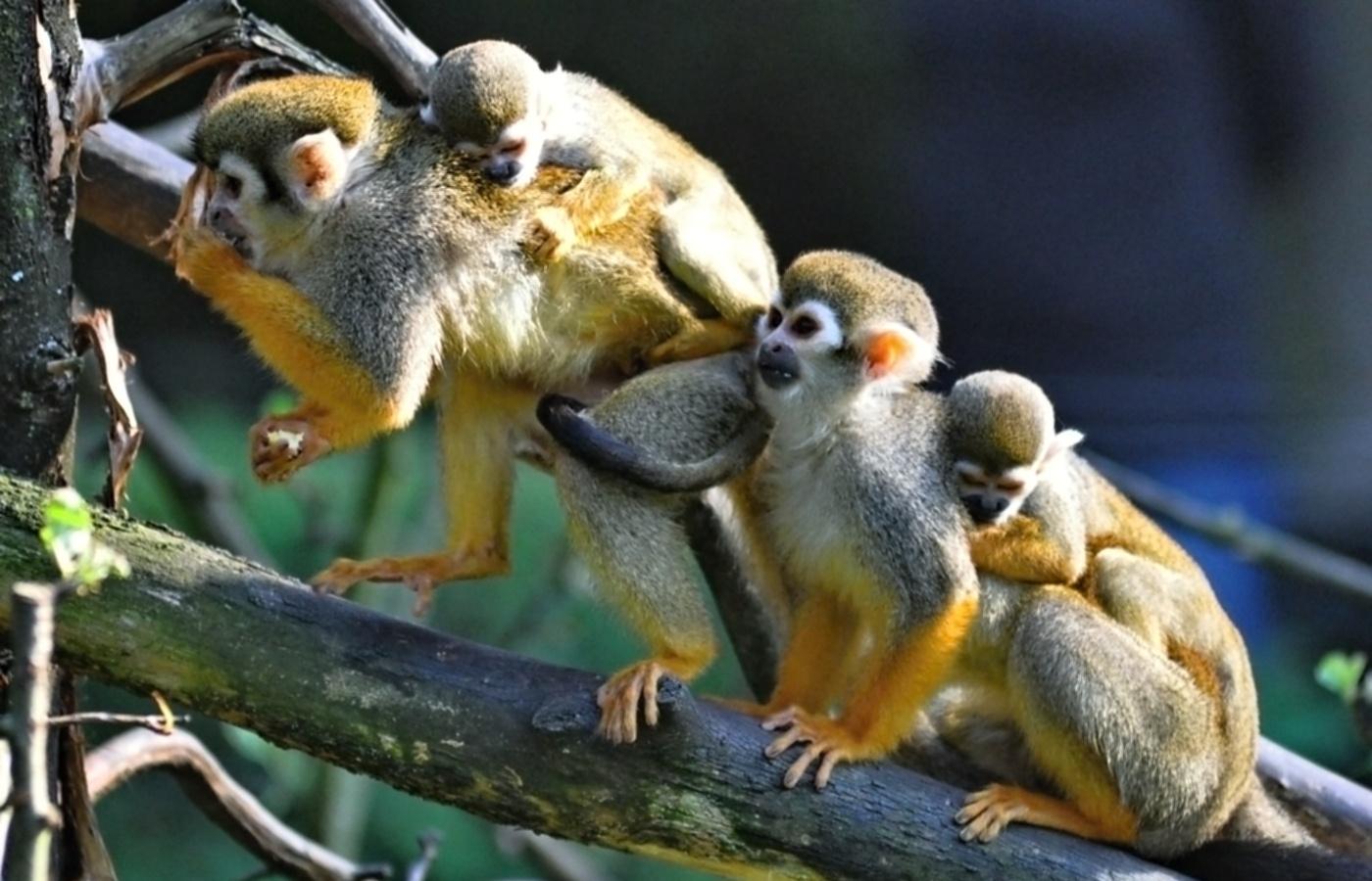 Ve zlínské zoo se narodila mláďata kotulů veverovitých