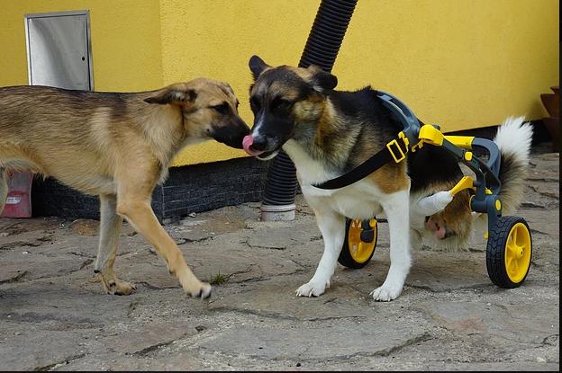 Český startup vyrábí invalidní vozíky pro zvířata, vznikají 3D tiskem