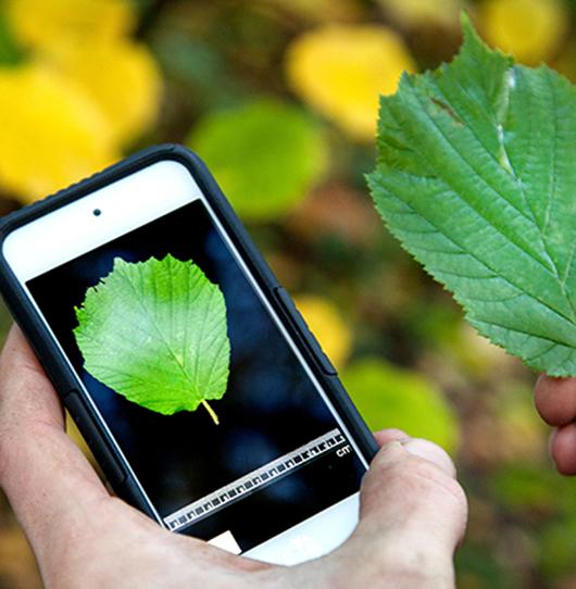 Aplikace určí jméno rostliny z fotografie, její databázi rozšiřují i čeští školáci