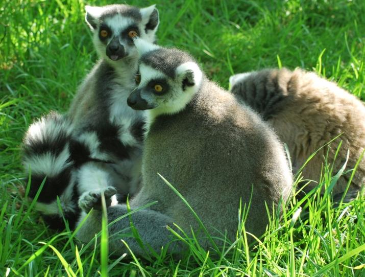 Zlínská zoo šetří životní prostředí