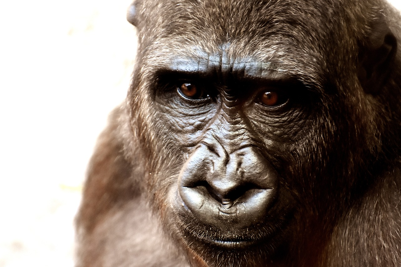 Praha pomůže ohroženým druhům zvířat ve volné přírodě
