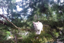 Bratři ze Seattlu zachránili ze stromů přes 2000 koček