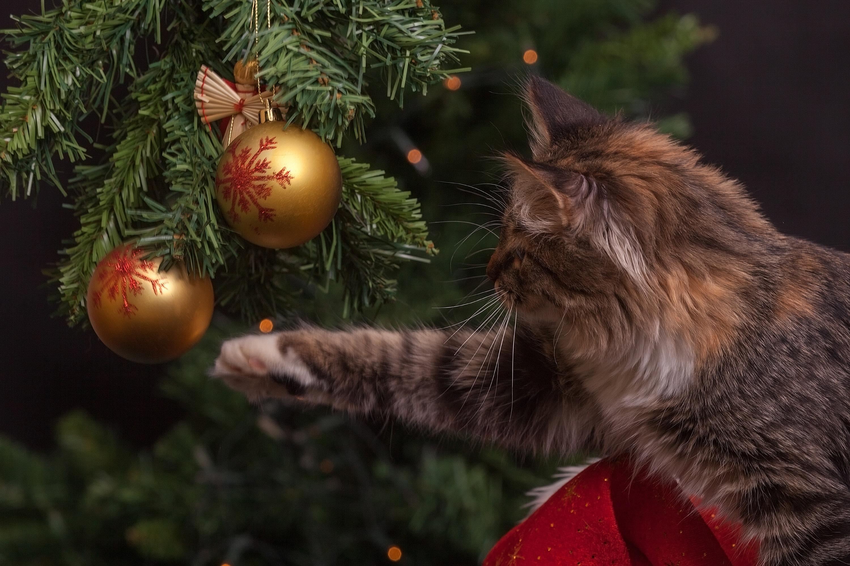 Kočičí kavárna uspořádala vánoční večírek pro osamělé seniory