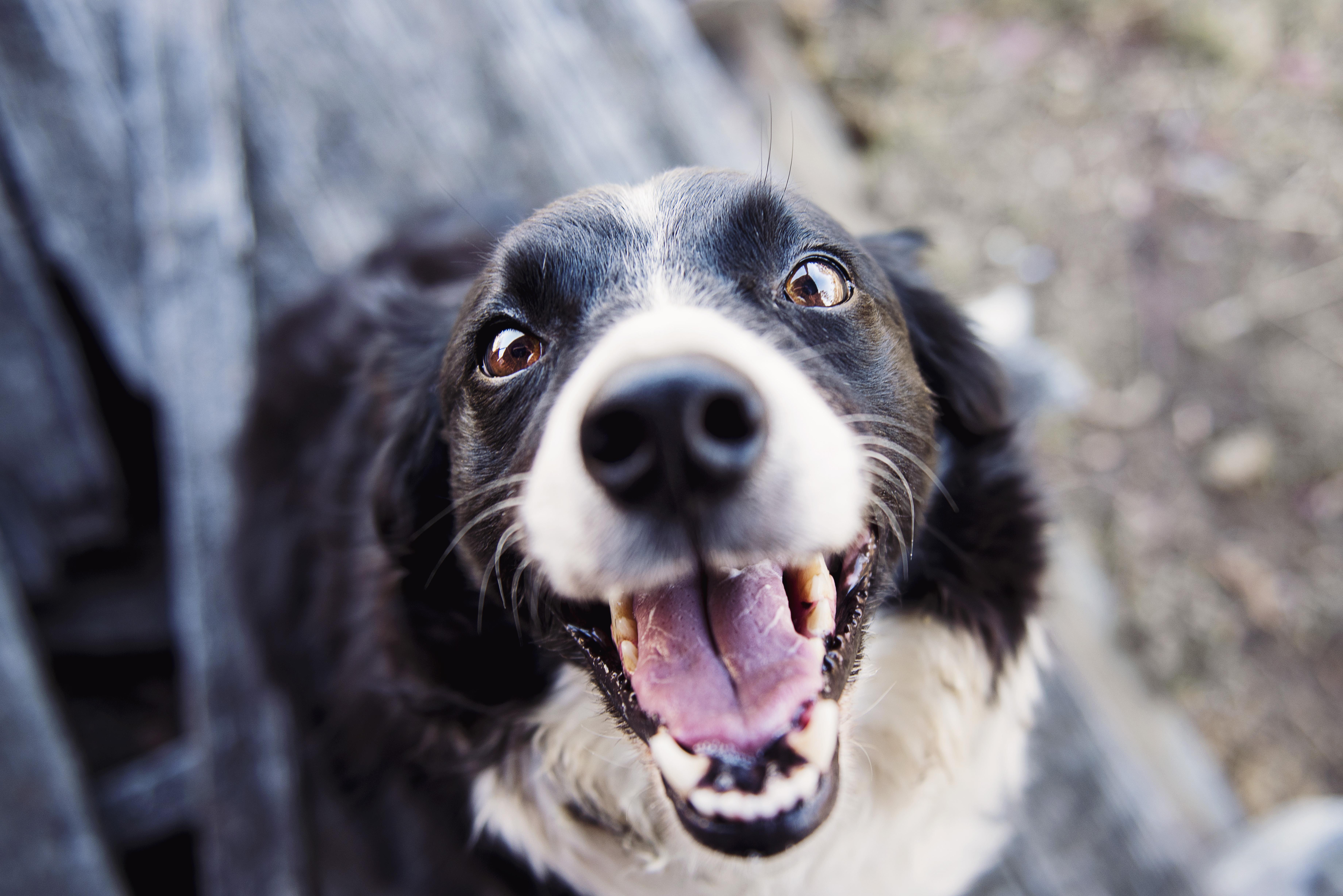 U zubaře pomáhají terapeutičtí psi dětem s autismem