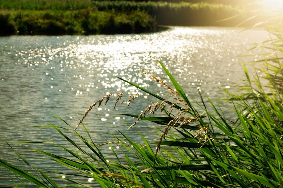 Kvalita pražských vodních toků se dlouhodobě zvyšuje