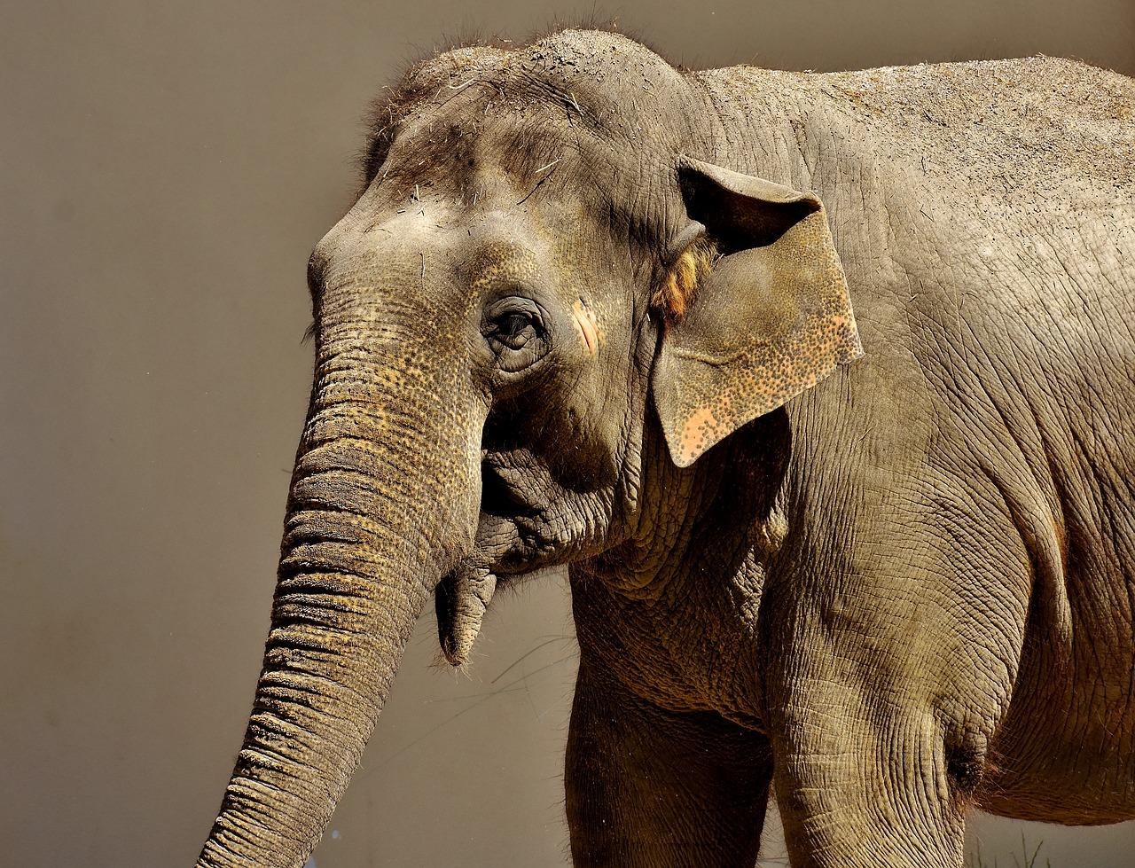 Návštěvníci zlínské zoo zakusí cestu po safari a další africké atrakce