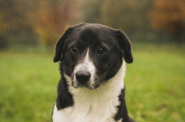 Ve zlínském útulku je možné virtuálně adoptovat psíka
