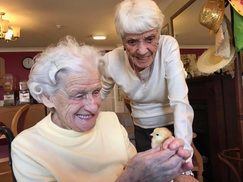 Slepice pomáhají lidem v domovech pro seniory s osamělostí